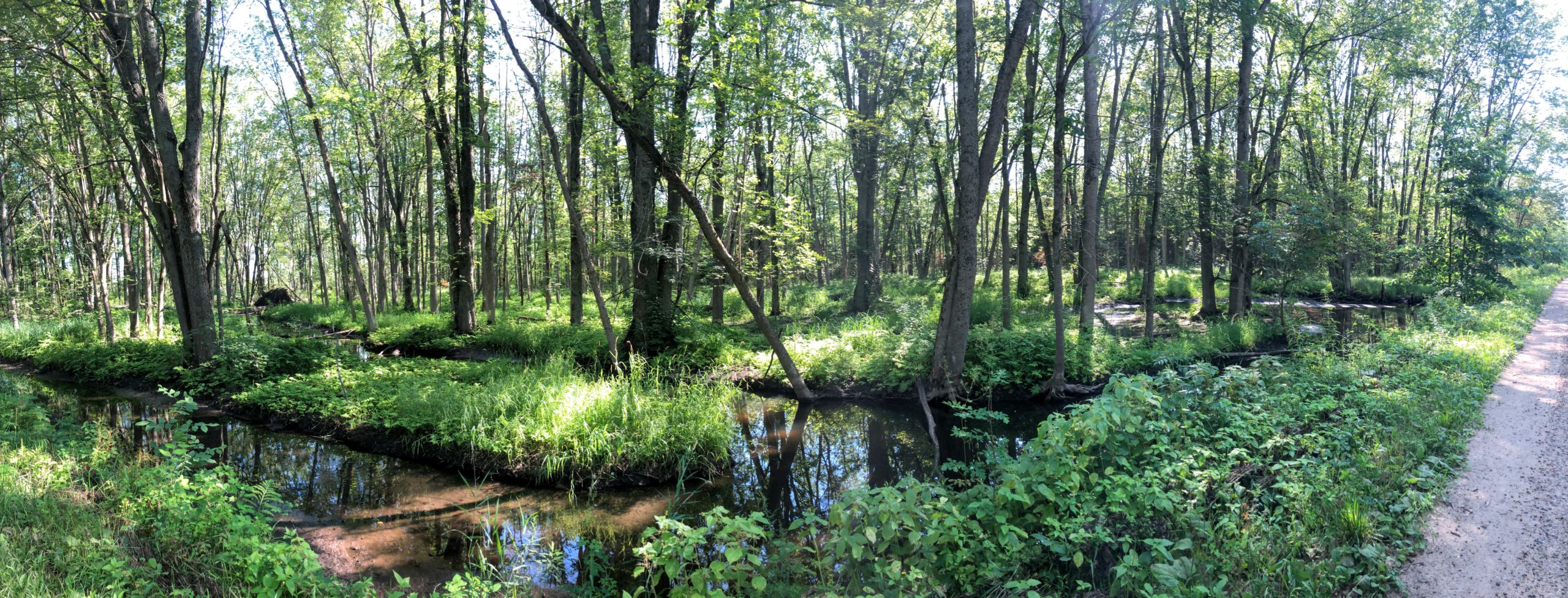 Simcoe County Loop Trail - Hodge Research Area,  Vespra Valley Rd, Minesing, ON L0L 1Y3