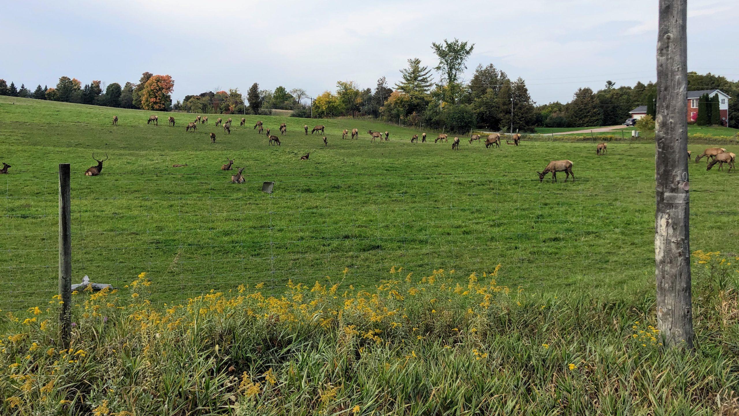 Passing an elk farm on the Durham Destroyer