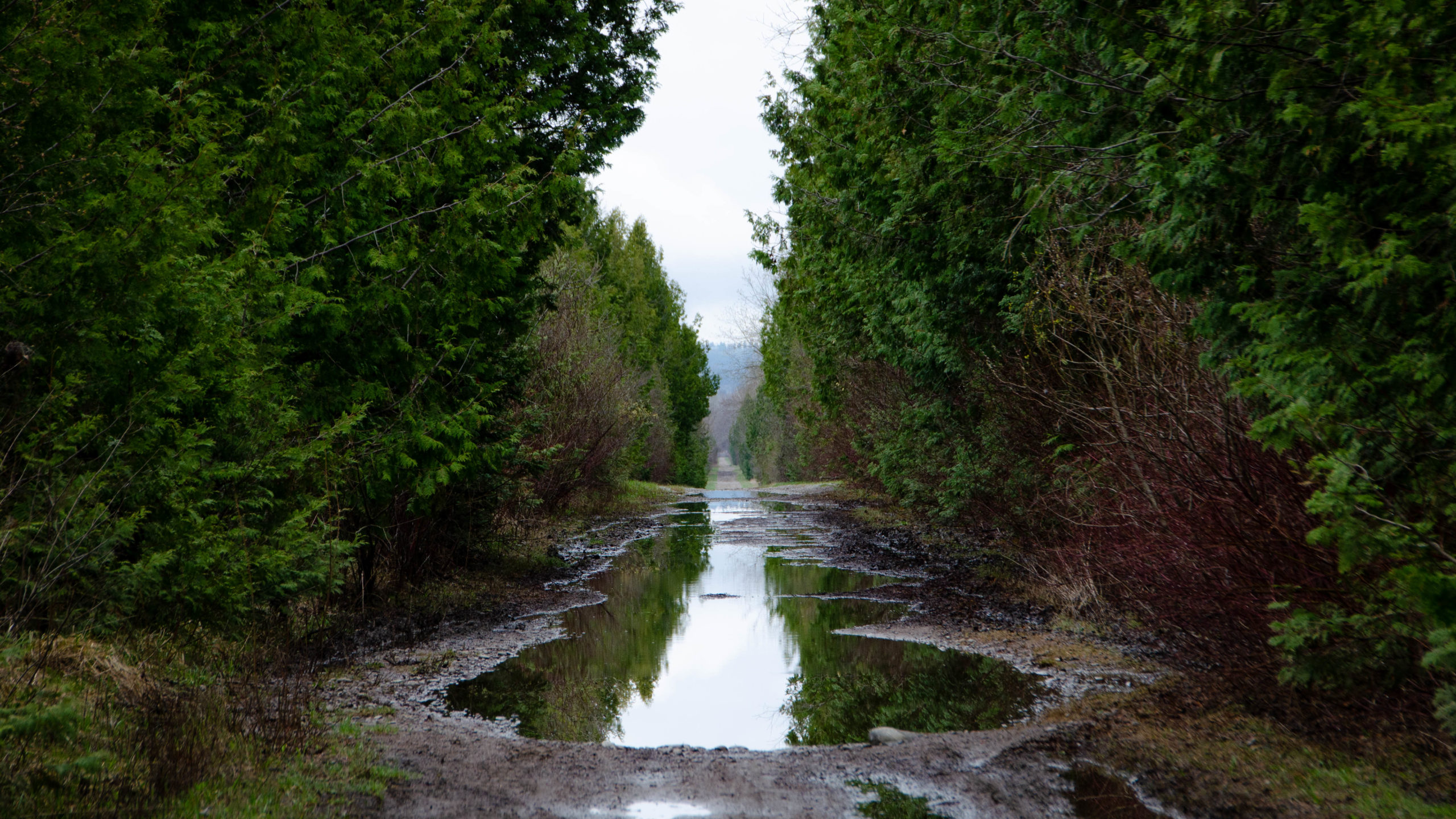 Massive puddle on the Victoria Rail Trail while riding the Tour of Scugog.