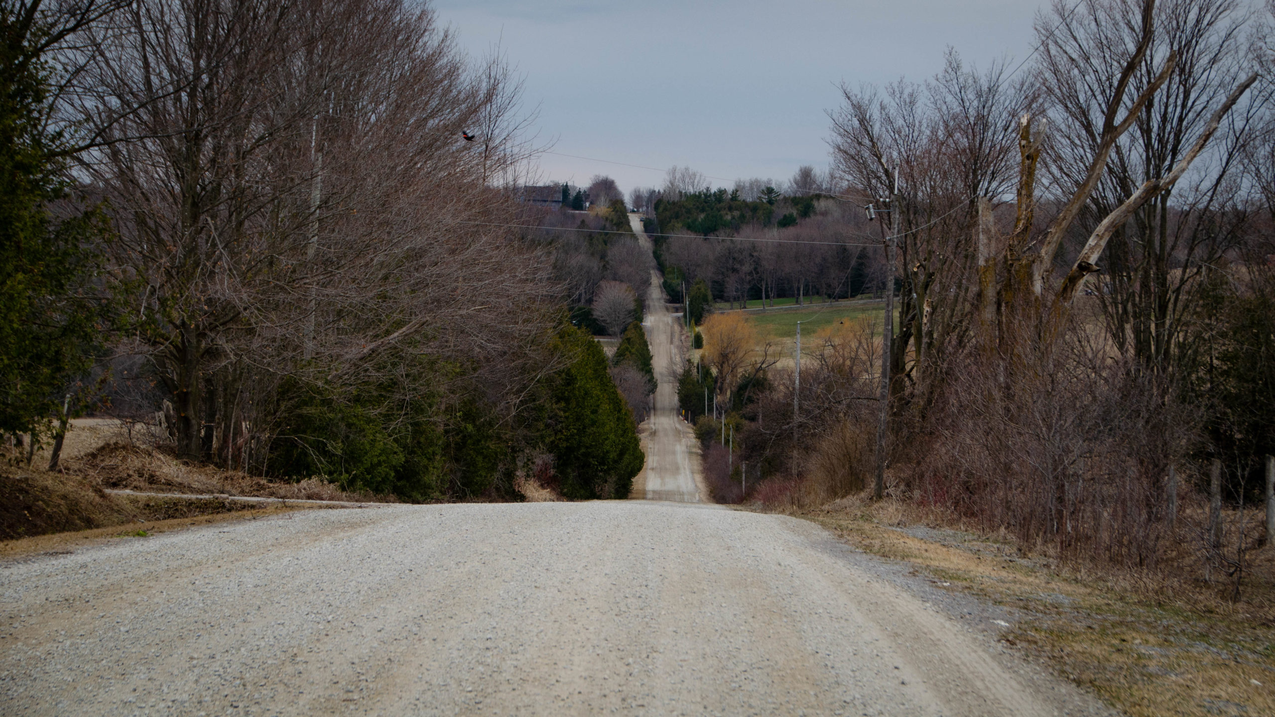 Picture of the last big climb on the Durham Destroyer - The Rookie, Concession Road 2, north of Port Perry.